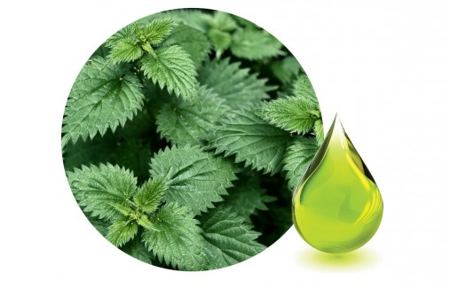 Nettle oil (Urtica Dioica) Macerated 100ml