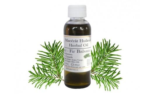 Balsam Fir Oil (Abies balsamea) Macerated
