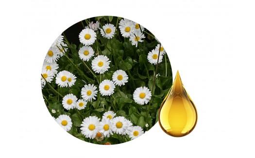 Daisy Herbal Oil (Bellis perennis)